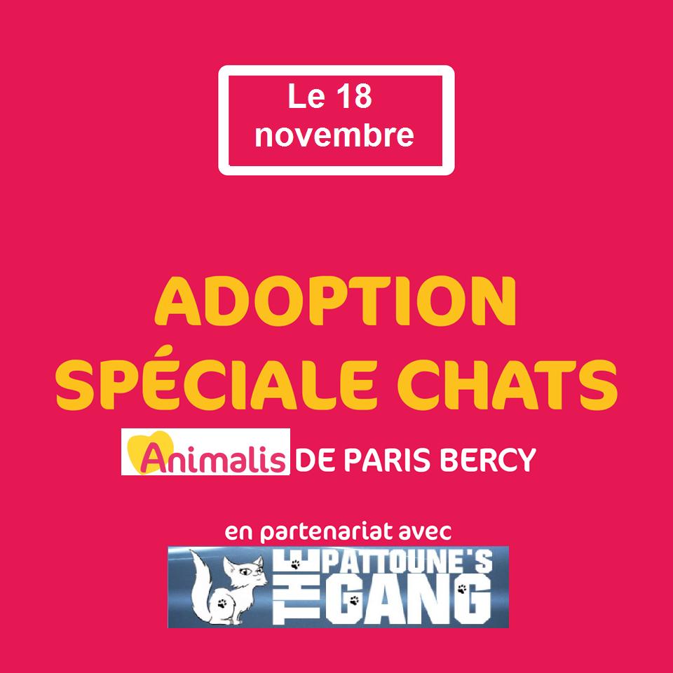 Ja le 18 novembre paris bercy