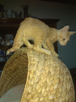Romeo escalade