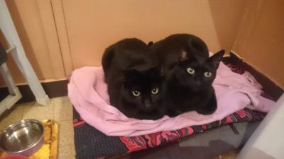 Sofie et caty